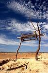 pouštní studna